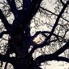 _DSC0360_klein